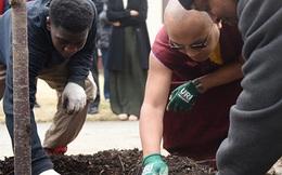 Công bố gây tranh cãi của các nhà khoa học Anh Quốc: Trồng cây có thể khiến các thành phố ô nhiễm hơn