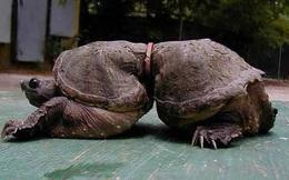 Chùm ảnh chấn động về ảnh hưởng của ô nhiễm môi trường đối với các loài động vật