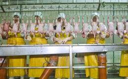 Công nhân làm gà phải đóng bỉm vì không có thời gian nghỉ giữa giờ