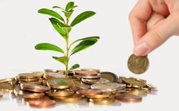 Trồng cây to cạnh nhà sẽ khiến tiền vào như nước