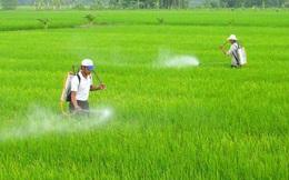 """Phun thuốc riêng để bán cho khách, nông dân Việt không biết đang tự tay """"giết"""" cả nhà?"""