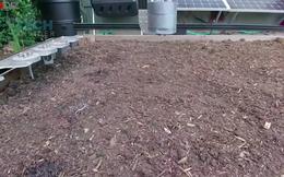 Không chỉ làm thay con người ở những công việc nặng nhọc và nguy hiểm, ngày nay robot còn có thể...làm vườn