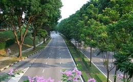 Muốn trồng 1 triệu cây xanh, Hà Nội hãy nhìn cách người Singapore đưa rừng vào thành phố