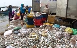Sự cố biển miền Trung khiến riêng tỉnh Hà Tĩnh có thêm 24.400 người không có việc làm