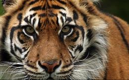 Kinh tế Indonesia - Hóa hổ hay mãi là mèo?