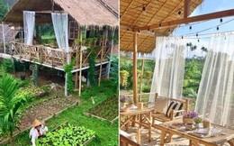 """""""Ngôi nhà giữa vườn rau"""" này đang được cư dân mạng Việt share điên đảo!"""