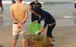 Dân Quảng Bình đổ xô vớt cá biển bán cho thương lái