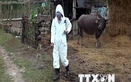 60% các bệnh mới xuất hiện trên người có nguồn gốc từ động vật