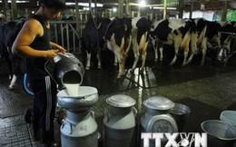 Cần trung tâm kiểm định chất lượng sữa độc lập để tránh tranh chấp