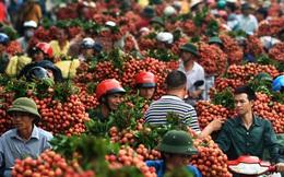 Công an, giao thông, hàng không, cửa khẩu, ngân hàng dồn lực cho trái vải Việt