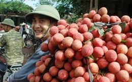 Cục trưởng Cục Bảo vệ thực vật: Từng rất xấu hổ vì Doanh nghiệp Việt làm ăn mất uy tín