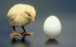 Trứng có trước hay gà có trước? Câu hỏi này đã có lời giải