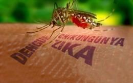 Thiết lập 8 điểm giám sát trọng điểm virus Zika tại khu vực phía Nam