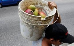 Mùa xoài cứu đói ở Venezuela