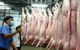 Đã xuất khẩu hàng chục ngàn tấn thịt heo