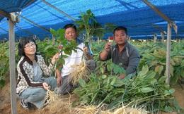 Sản xuất nông nghiệp từ những mảnh ruộng nhỏ - kinh nghiệm của Hàn Quốc