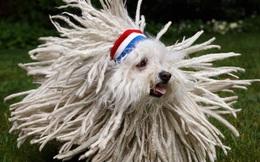 """Những chú chó """"quyền lực"""" nhất làng công nghệ thế giới"""