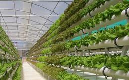 Hành động mới của Chính phủ kiến tạo để phát triển nông nghiệp: 'Gật đầu' với khu NN công nghệ cao tại Phú Yên
