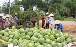 Big C hỗ trợ tiêu thụ 400 tấn dưa hấu cho nông dân Quảng Ngãi