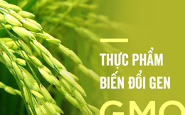 Giáo sư về an ninh lương thực của Singapore giải thích lý do thực phẩm biến đổi gen gây tranh cãi