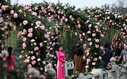 Lễ hội nhiều hoa héo, hoa giả, ban tổ chức nói gì?