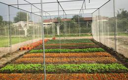Nhà giàu ăn sạch: Bỏ gần 2 tỷ mua đất tự trồng rau