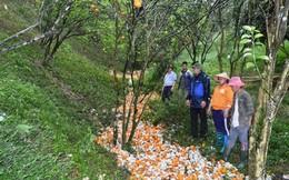 Mưa lớn, một xã có tới 368 tấn cam rụng, ước thiệt hại hơn 5 tỷ đồng