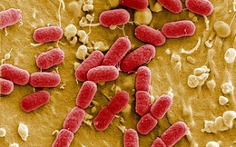 Việt Nam xuất hiện siêu vi khuẩn kháng tất cả kháng sinh