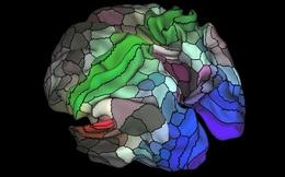 Các nhà khoa học khám phá ra 97 vùng trong não bộ chưa từng được biết đến trước đây