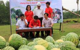 """Chuyện cuối tuần: Chuyện Big C làm việc """"phi kinh tế"""", mua dưa hấu mà nông dân Quảng Ngãi phải làm thức ăn cho bò"""
