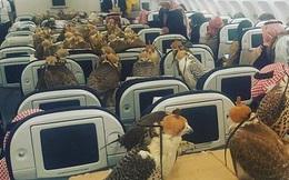 80 chú chim ưng chễm chệ trên khoang máy bay của hãng Qatar, người dùng mạng quốc tế được phen mắt tròn mắt dẹt