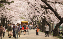 Trường tiếng Nhật – kênh tuyển dụng lao động trá hình của người Nhật?
