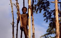 Cận cảnh bộ lạc sống trên cây, cao tới 50m và tách biệt với loài người ngay tại Đông Nam Á