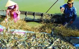 10 năm trầm bổng của con tôm Việt trước ngày đặt mục tiêu trở thành công xưởng sản xuất tôm của thế giới