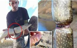 Vớt được con cá có hình thù kỳ dị, chàng trai chỉ ra 1 vấn đề khiến cả thế giới quan ngại