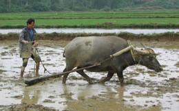 Chuyên gia kinh tế Phạm Chi Lan: Nông nghiệp Việt Nam tuột dốc vì tiền đầu tư đang đổ nhanh sang các ngành khác