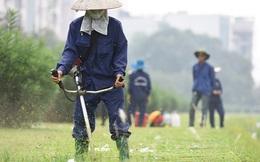 Hà Nội quy định chi tiết lượng nước tưới khi chăm vườn hoa