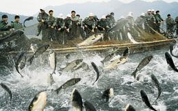 Bloomberg: Sự thật về hành trình của lợn, cá, tôm... kháng kháng sinh từ Trung Quốc ra khắp thế giới