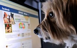 Với sự ra đời của Thông tư 38, những kẻ thích comment công kích, xúc phạm người khác trên Facebook sẽ phải dè chừng