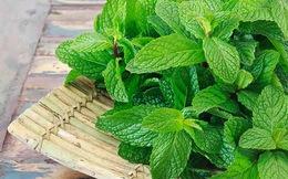 Muốn giảm cân nhanh và an toàn, học ngay 3 công thức chế biến loại rau ở Việt Nam có rất nhiều