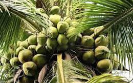"""Sau khi bỏ ngàn tỷ mua công ty đường, Vinamilk tiếp tục """"shopping"""" thêm 1 công ty dừa ở Bến Tre"""