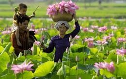 """Ông chủ gốm sứ Minh Long hiến kế biến hoa sen thành """"tulip Hà Lan"""" của Đồng Tháp"""