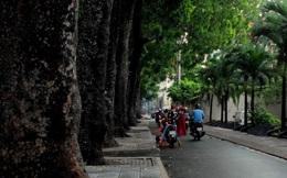 """TP.HCM: Chính thức định đoạt """"số phận"""" 258 cây xanh trên đường Tôn Đức Thắng"""