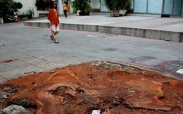 TP.HCM chặt bỏ số lượng lớn xà cừ trên đường Tôn Đức Thắng