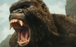 Đạo diễn bom tấn 'Kong: Skull Island' là đại sứ du lịch Việt Nam