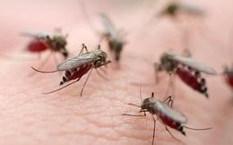 """Chẳng phải """"thịt thơm, máu ngọt"""", đây mới là nguyên nhân khiến bạn bị muỗi đốt nhiều hơn người khác"""