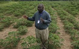 """Nhờ công nghệ, tầng lớp trung lưu ở quốc gia châu Phi này có thể làm nông nghiệp mà không phải """"chân lấm tay bùn"""""""