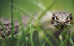 'Động cỏ đánh rắn': Kế sách kinh doanh từ công ty to đến doanh nghiệp nhỏ đều cần biết