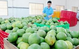 Kim ngạch xuất nhập khẩu nông sản tăng mạnh