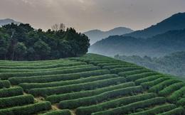 Vì sao ngành đồ uống có lịch sử 5.000 năm này đang chật vật tồn tại ở Châu Á?